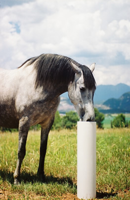 Ranch Truck Caps >> The Drinking Post, Horse Automatic Waterer thats Energy Free
